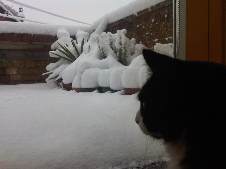 Studio Cat looking at the snow.